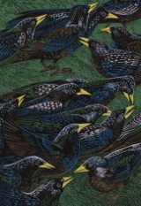 Jewelled starlings